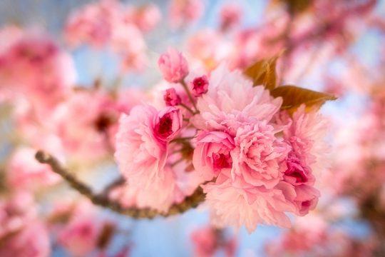 Saisonale Menus Frühling
