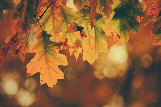 Saisonale Menus Herbst